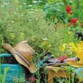 Pesticides : encore un été