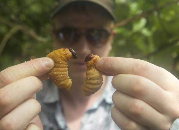 Les insectes sauveront-ils le monde ?