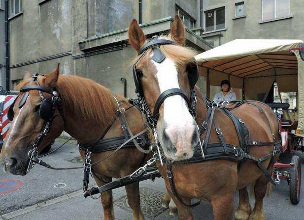 Des chevaux et des villes
